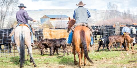3 Cattle Fence Mistakes to Avoid , Northwest Escambia, Florida