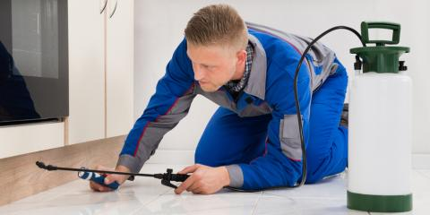 The Top 3 Reasons to Hire a Professional Exterminator, Newport, Ohio