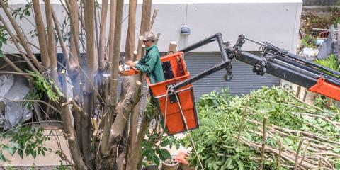 3 Tree Services That Require a Bucket Truck, Commerce, Georgia