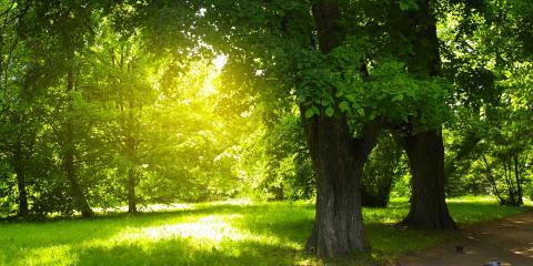 Do's & Don'ts of Tree Care, Lincoln, Nebraska