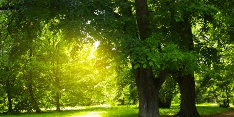 HVAC Service Provider Recommends Shade Trees for Cost Savings, Lincoln, Nebraska