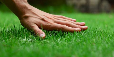 Lawn Treatment Company Shares 3 Common Lawn Diseases in NE Ohio, North Ridgeville, Ohio