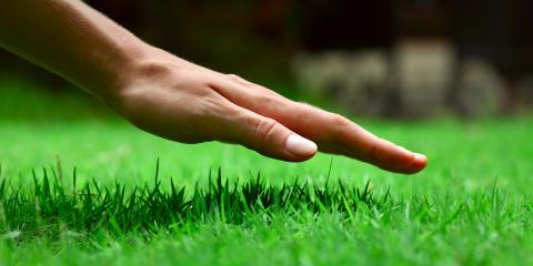 Do's & Don'ts of Seeded Lawn Care, Ballwin, Missouri