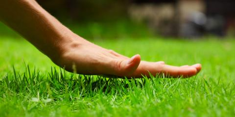 How Can You Identify the Type of Grass Used in Your Landscaping?, Jessup, Maryland