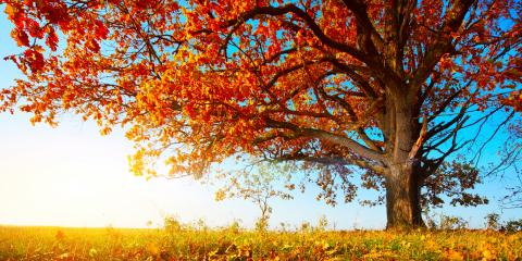 How Do You Know What's Wrong With the New Tree on Your Landscape?, Glen Carbon, Illinois