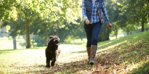 5 Tips for Helping Your Dog Prevent Ticks, Koolaupoko, Hawaii