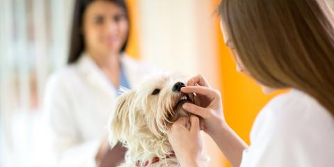 4 Veterinarian Tips About Pet Dental Health , High Point, North Carolina
