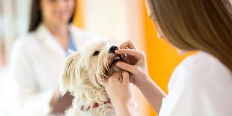 3 Reasons Dental Care Is Important for Dogs, Hilton, New York