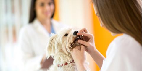 Everything You Need to Know About Pet Dental Care, Lincoln, Nebraska