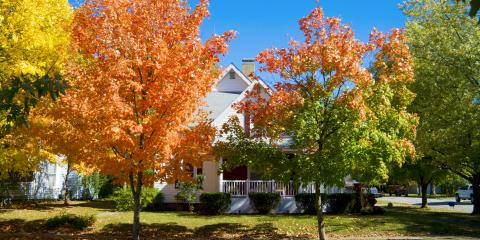 What's Root Rot & How Can You Treat It?, Abbotts Creek, North Carolina
