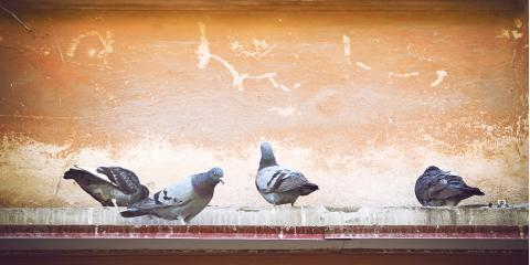 Animal Removal Pros On What To Do If A Bird Is In Your Chimney, New Milford, Connecticut