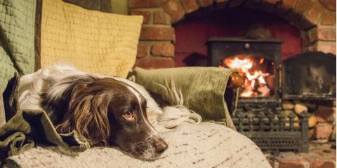 4 Fireplace Safety Tips for Pet Owners, Kennebunkport, Maine