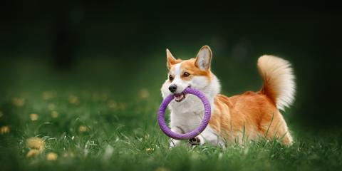 How Can I Choose a Quality Dog Kennel?, Keaau, Hawaii
