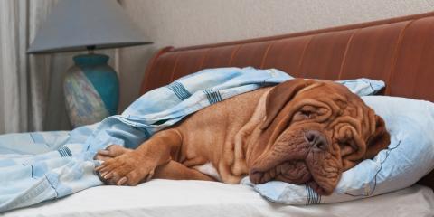 4 Common Canine Illnesses, Elkton, Maryland
