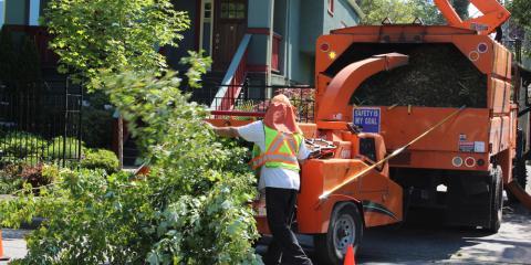 3 Benefits of Hiring a Professional Tree Trimming Company, Honolulu, Hawaii