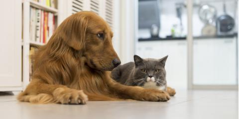 Can Pets Have Allergies?, Wahiawa, Hawaii