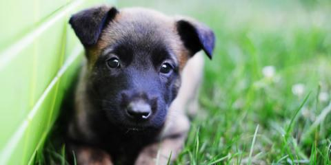 A Pet Health Specialist on What to Expect During Your Puppy's First Vet Visit, Hilton, New York
