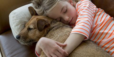 Animal Clinic Shares 3 Reasons to Choose Adoption, Foley, Alabama