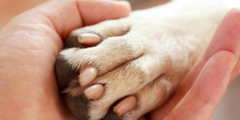 $20 for Bath and Nail Trim This Week Only!, Springfield, Ohio