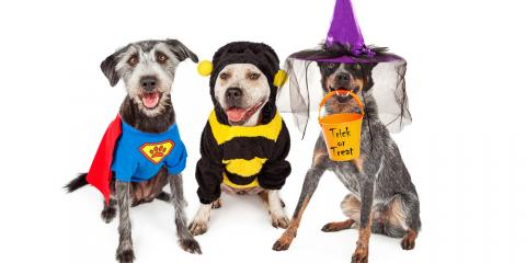 Top 5 Veterinarian-Recommended Pet Safety Tips for Halloween, Ewa, Hawaii