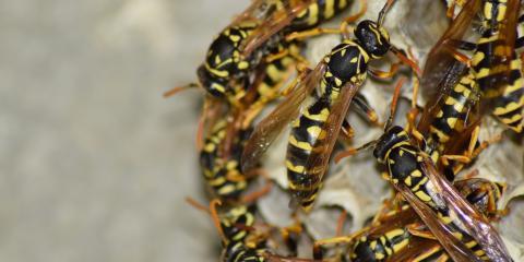 Essential Wasp Control Do's & Don'ts, Bolivar, Missouri