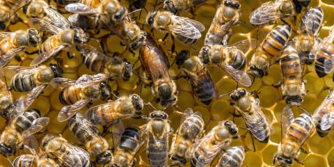 The Differences Between Bees, Wasps, & Hornets, North Hobbs, New Mexico