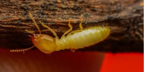 3 Ways to Spot Termite Damage in Your Home, Lexington-Fayette, Kentucky