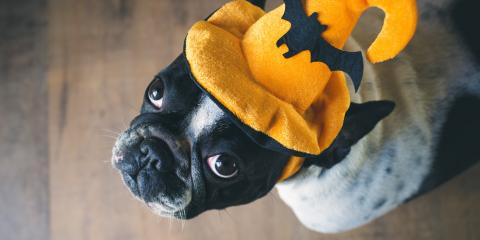 How to Protect Your Dog This Halloween, Hilton, New York