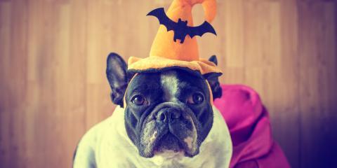 3 Halloween Dangers Your Pet Should Avoid, Lincoln, Nebraska