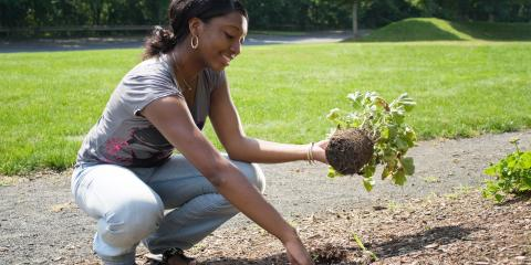 8 Reasons to Use Mulch in Your Yard This Summer, Beavercreek, Ohio
