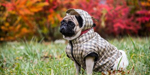 Essential Pet Grooming Do's & Don'ts for Dress Up Your Pet Day, Nicholasville, Kentucky