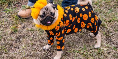 5 Tips From a Veterinarian to Keep Your Pet Safe This Halloween, Statesboro, Georgia