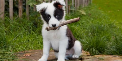 Cincinnati Veterinarians Explain What You Should Know About Owning a New Dog, Cincinnati, Ohio