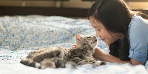 4 Essential Kitten Pet Care Tips, Honolulu, Hawaii