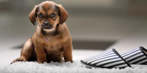 How Professional Carpet Cleaners Can Help Get Rid of Pet Odors, Koolaupoko, Hawaii
