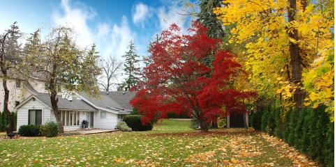 4 Tips for Tree Care in the Fall, North Huntingdon, Pennsylvania