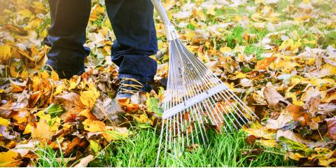 5 Fall Lawn Care Tips for a Beautiful Spring Yard, Scottsville, New York