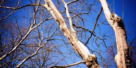 3 Reasons to Schedule Tree Removal for a Dead Tree, Miamitown, Ohio