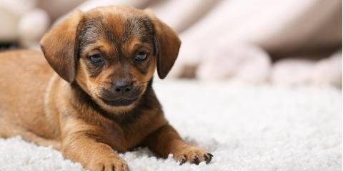 4 Effective Pet Odor Removal Tips for Your Carpets, Durango, Colorado