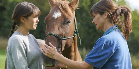A Brief Guide to Horse Feed, Bolivar, Missouri