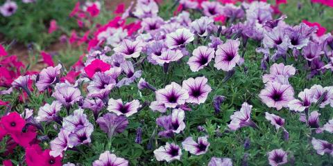 3 Plants That Promote Insect Control, Trussville, Alabama