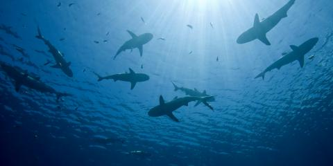 What to Know Before Going Shark Diving, Waialua, Hawaii