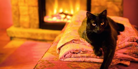3 Ways to Keep Your Cat Comfortable This Winter, Fairfield, Ohio