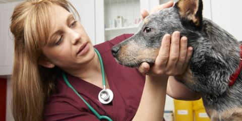How Can I Prepare My Pet for Their First Exam? A Veterinarian Explains, Buckeye Lake, Ohio