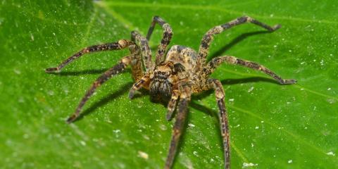 4 Common Spiders of Central Kentucky, Lebanon, Kentucky