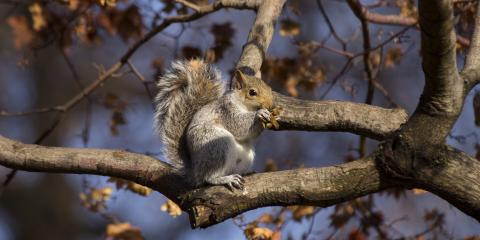 How to Appreciate Squirrels Without Sacrificing Your Landscape , Bellville, Texas