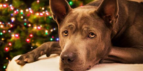 How to Keep Pets Safe Around Christmas Trees, Perry, Georgia