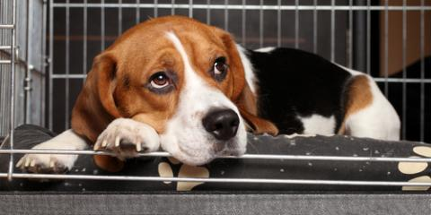 Lincoln Veterinarian Shares 5 Tips to Prepare Your Pet for Boarding, Lincoln, Nebraska