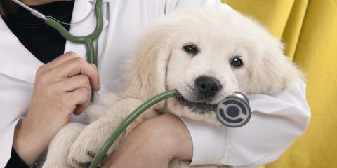 How to Ease Your Pet's Fear of the Veterinarian, Lincoln, Nebraska