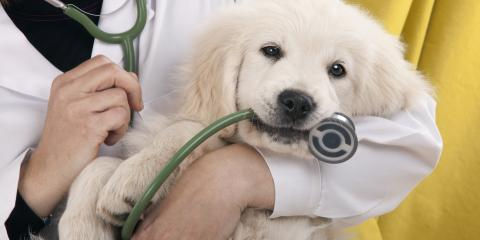 Do's and Don'ts After Pet Surgery, Avon, New York